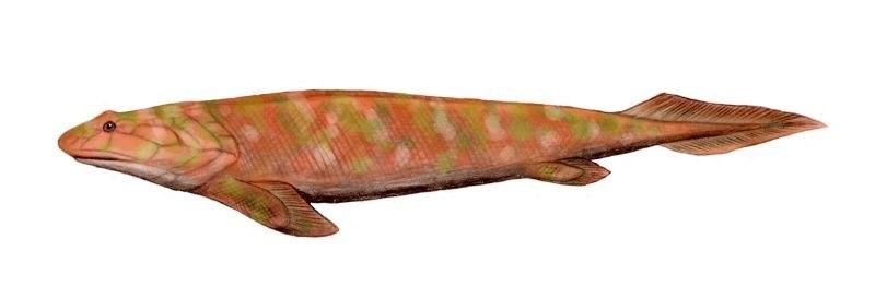 Panderichthys BW