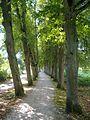 Pappenheim Lindenallee.jpg