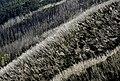 Parque Nacional Alpino 03.jpg
