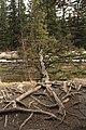 Passeio em Banff 2019 (7655).jpg