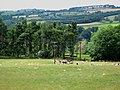 Pastures and woods west of the B6306 Hexham to Slaley road - geograph.org.uk - 498413.jpg