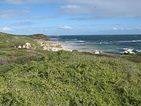 Penguin island wa.jpg