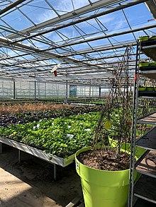 pflanzen kölle volksdorf