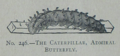 Picture Natural History - No 246 - The Caterpillar, Admiral Butterfly.png