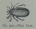 Picture Natural History - No 300 - The Tick.png