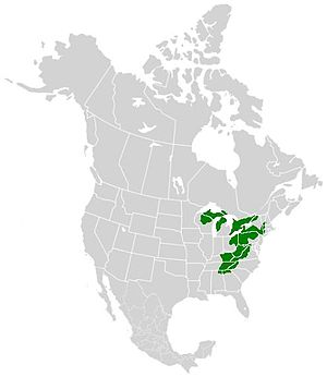 Pieris virginiensis - Image: Pieris virginiensis range map