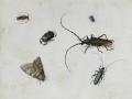 Pieter Holsteyn I Insektenbild.png