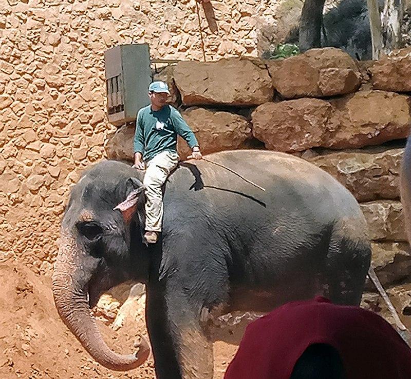פילים בגן החיות התנכי בירושלים