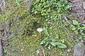 Pilze Nähe der Hexenstühle Kastelruth 3.jpg
