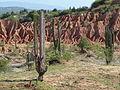 Plantas en el Desierto de la Tatacoa.JPG