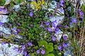 Plants from Sassolongo 12.jpg