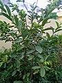 Plants in Sector 28 Faridabad 4.jpg
