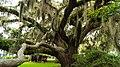 Playground Tree (24130905).jpeg
