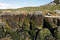 Plouescat - Allée couverte de Guinirvit - PA00090215 - 011.jpg