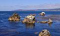 Point Lobos September 2012 004.jpg