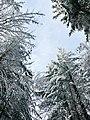 Pokój- korony drzew.jpg