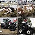 Poljoprivredni sajam 8.jpg