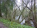 Pond in Ashford Chase - geograph.org.uk - 357337.jpg
