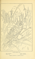 Portraits and Habits of Our Birds-1 0319.png