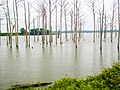Poverty Point Reservoir (2013) IMG 7439.JPG