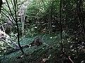 Pri Babskej diere - panoramio.jpg