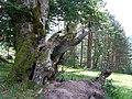 Prielohy - panoramio (3).jpg
