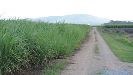 Private road through sugar cane fields, Gilberton, 2014.JPG