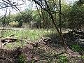 Psilskyi Landscape Reserve (05.05.19) 07.jpg
