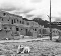 Pueblo Dog.png