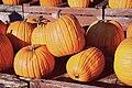 Pumpkins hires2.jpg