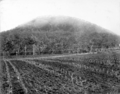 Queensland State Archives 2616 Training farm Beerburrum July 1917.png