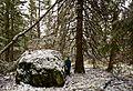 Røyrtveit naturreservat - Evje 071114 (2).jpg