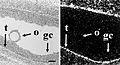 RNA-in-situ-dark-field.jpg