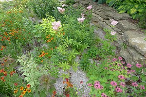 Catchwater - A rain garden is another man-made device by digging a hole in an area and creating a garden with a variety of vegetation. The vegetation helps catch storm-water runoff then filters the water to reduce the pollutants before the water reenters the hydrology cycle.