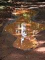 Rain puddles, Brownsberg 2.JPG