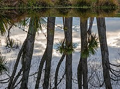 Reflection of trees in a pond, The Groynes, Christchurch, New Zealand.jpg