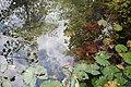 Reflexo no lago (8300112565).jpg