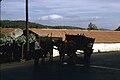 Região de Guimarães-Carro de boi-19670728.jpg