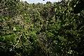 Reserva Ecológica Limones-Tuabaquey CF9A3386.jpg