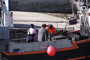 Retour de la pêche à la seiche du fileyeur Jason IV (3).JPG