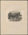 Rhinoceros unicornis - 1700-1880 - Print - Iconographia Zoologica - Special Collections University of Amsterdam - UBA01 IZ22000209.tif