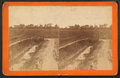 Rice field and dyke, by Ryan, D. J., 1837-.png