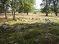 Ringstad, fornlämningsområdet, den 10 juli 2007, bild 23.JPG