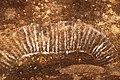 Rock Art (14990375349).jpg