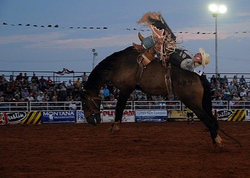 Rodeo bareback riding