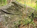 Roihuvuoren-kallio11.JPG