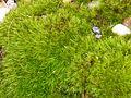 Rolling stone gathers no moss.jpg