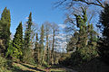 Rombergpark-100331-11495-Bachlauf.jpg
