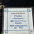 Rosa FEulma. 02.jpg
