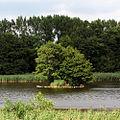 RossendorferTeich Nixeninsel2.jpg